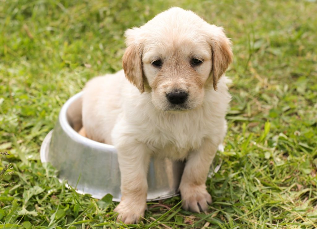 10 Signs of Cancer in Dogs You Must Know