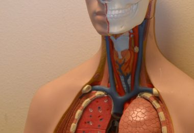 10 Most Common Lungs Problems And Lung disease